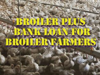 SBI Broiler Plus Agriculture Bank Loan - Scheme for Broiler Farmers